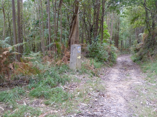 One of two sets of shells AND arrows on a never-ending trail