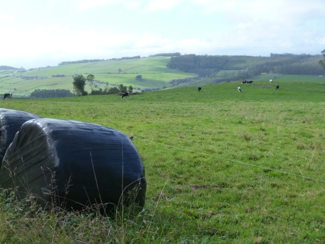 Rich green fields produce rich hay for the animals